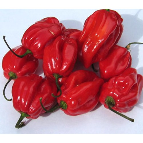 FRESH PEPPER 100g